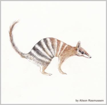 https://www.redbubble.com/people/alisonrasmussen/works/27554167-numbat?asc=u